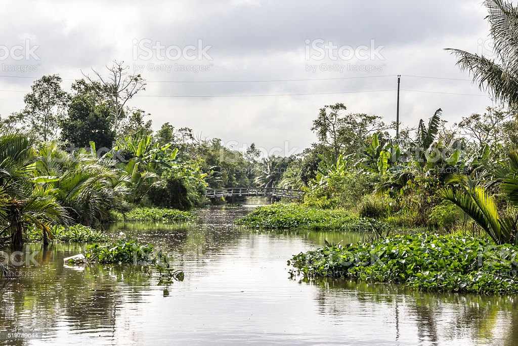 canal in the Mekong delta stock photo