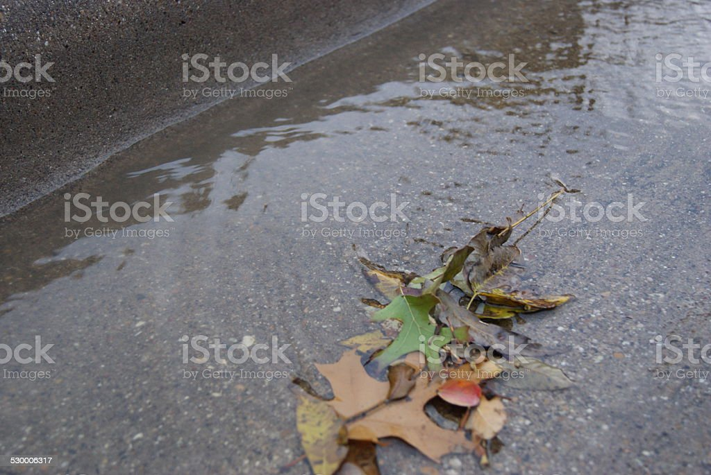 Canal of Leaves royalty-free stock photo