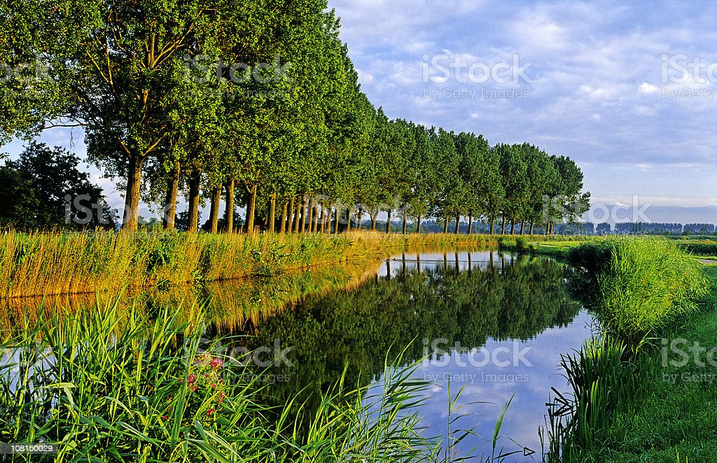 Canal with Big Green Trees royalty-free stock photo