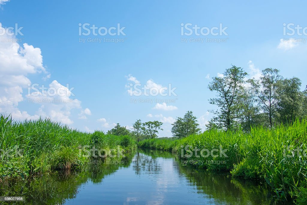 Canal with reed and trees in nature reserve in spring stock photo