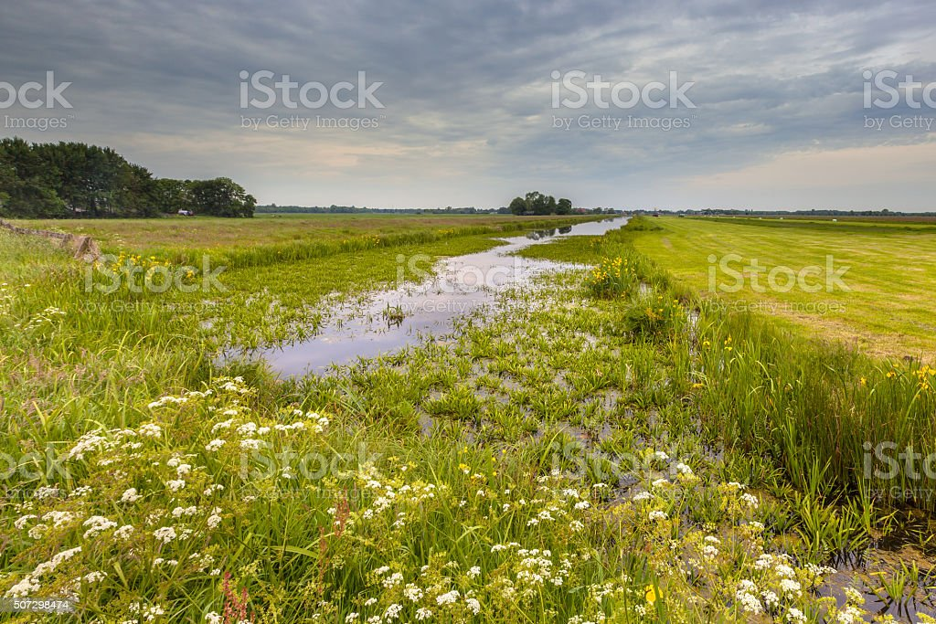 Canal with Water Soldier vegetation stock photo