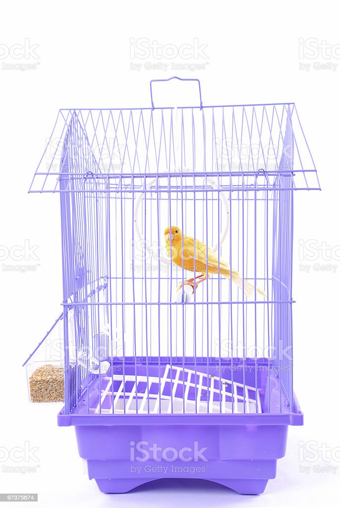 Canary in the Cage royalty-free stock photo