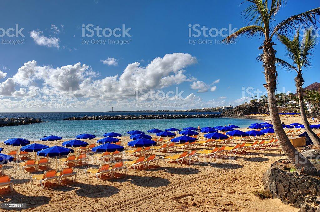 Canary island beach and Palm stock photo