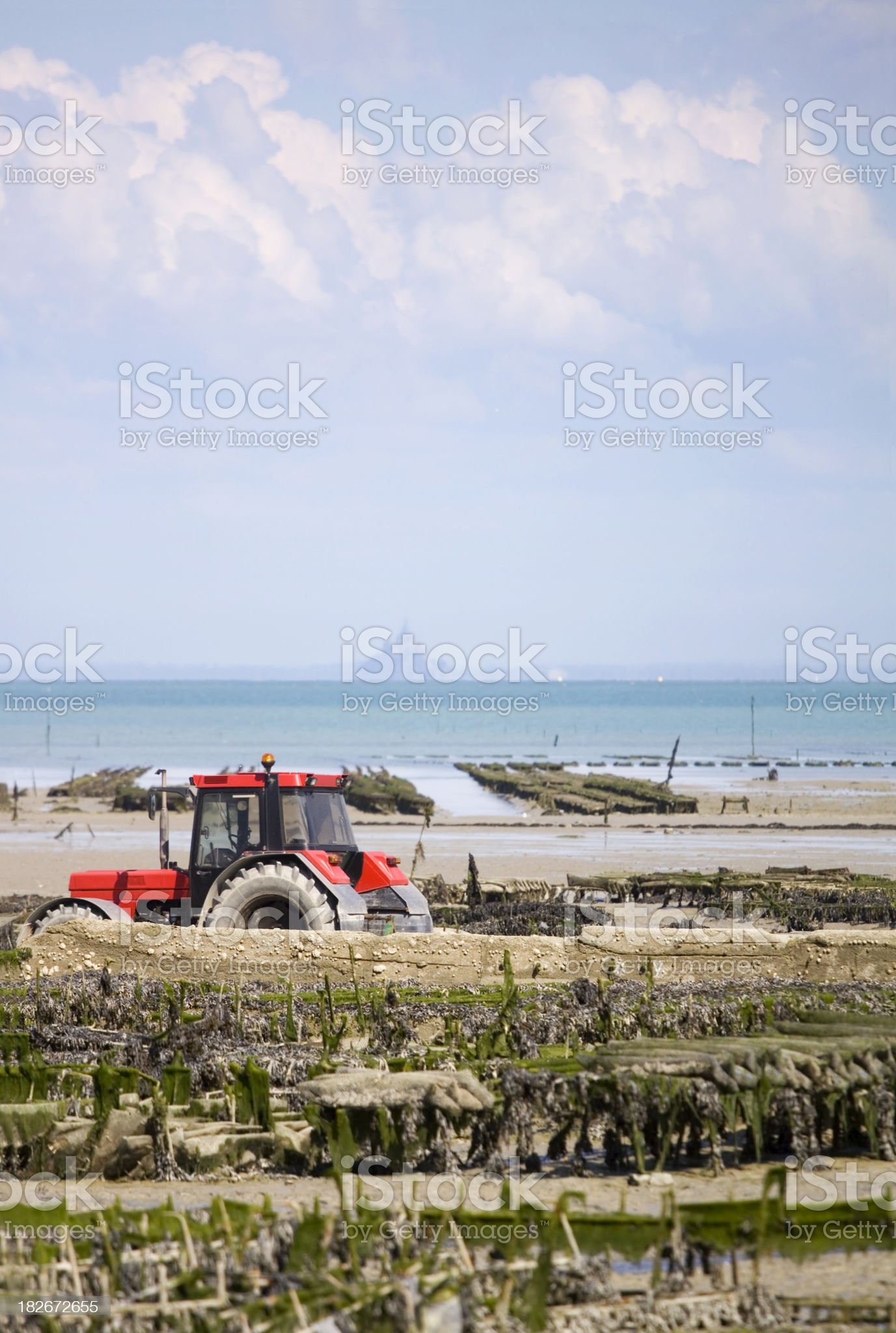 Cancale Oyster Beds Brittany royalty-free stock photo