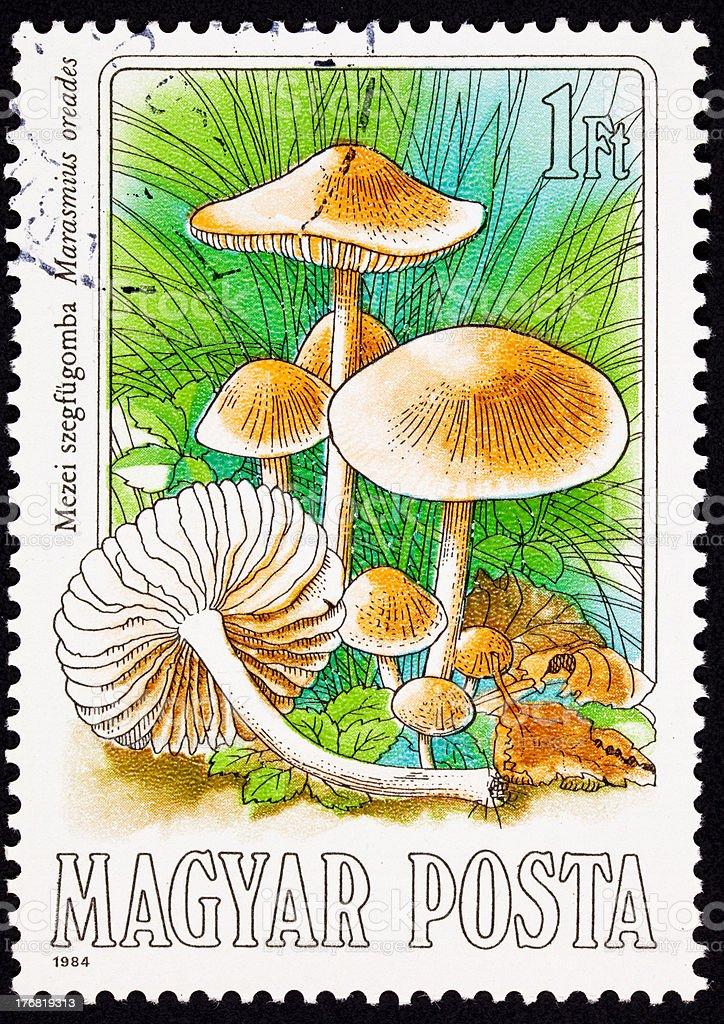 Canceled Hungarian Postage Stamp Edible Mushroom, Scotch Bonnet, Marasmius Oreades royalty-free stock photo