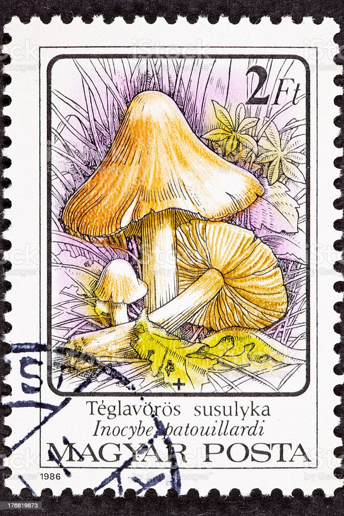 Canceled Hungarian Postage Stamp Inocybe Erubescen/Patouillardi Poisonous Mushroom In Wild royalty-free stock photo