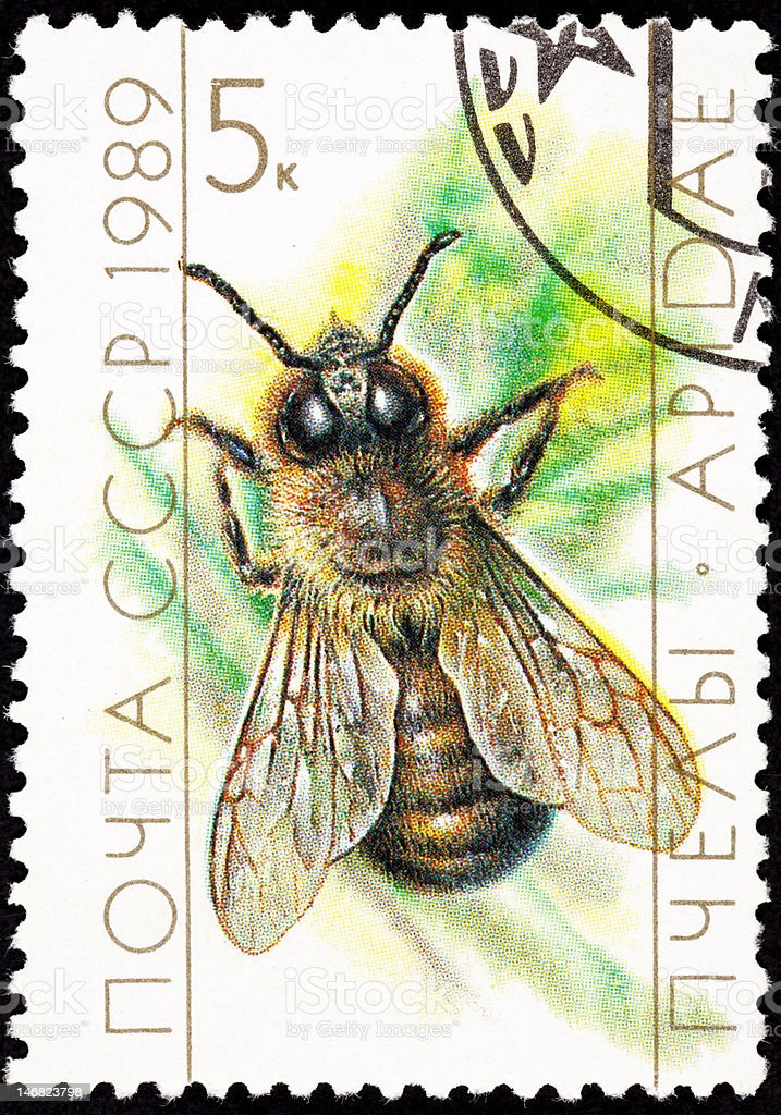 Canceled Soviet Russia Postage Stamp European Honey Bee Drone vector art illustration
