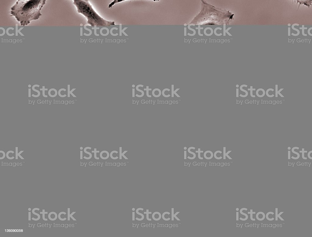 Cancer cells in culture stock photo