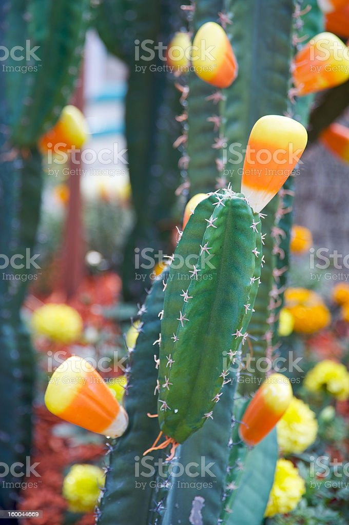 Candy corn Halloween royalty-free stock photo