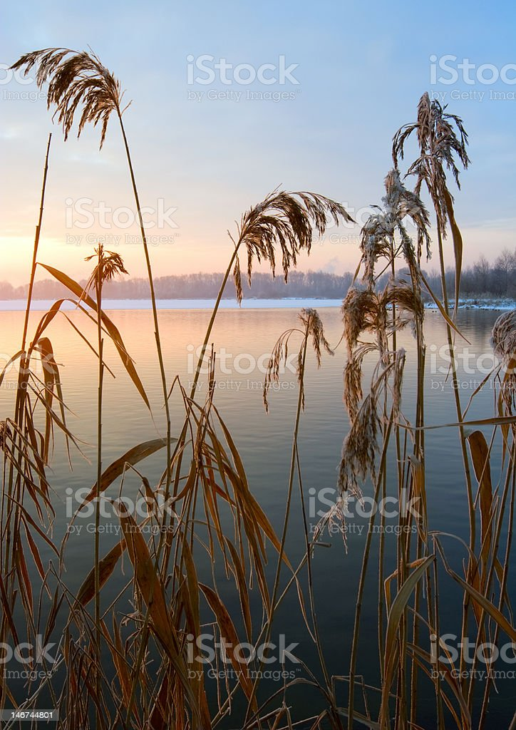 cane in the rays of rising sun chilly morning royalty-free stock photo