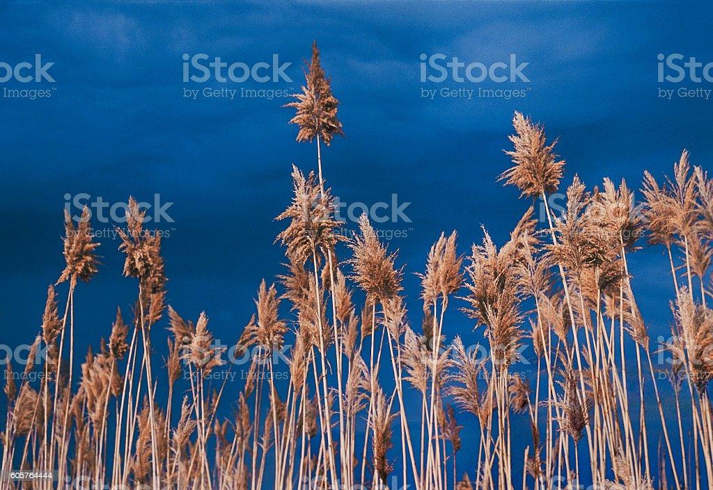 Cane on a background of dark sky stock photo