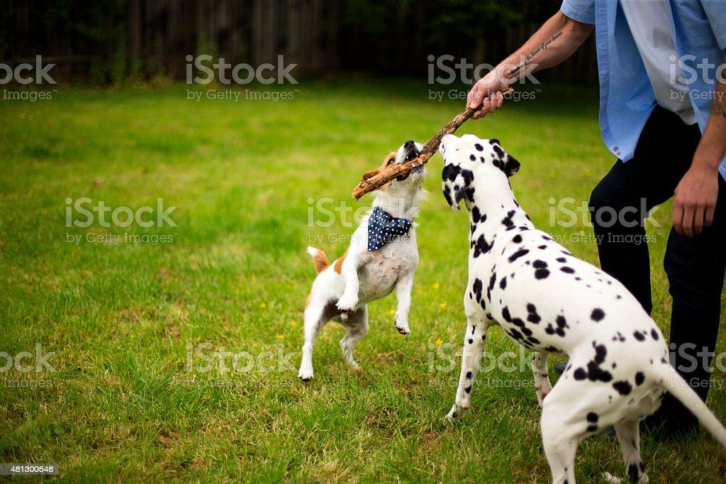 Canine Fun stock photo
