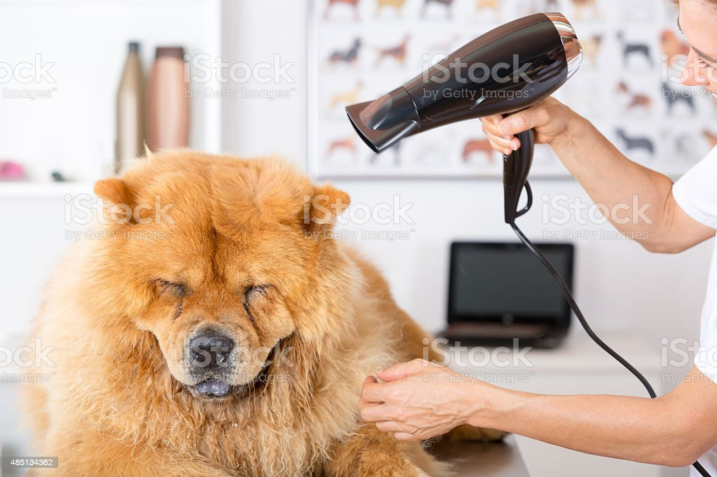 Canine hairdresser stock photo