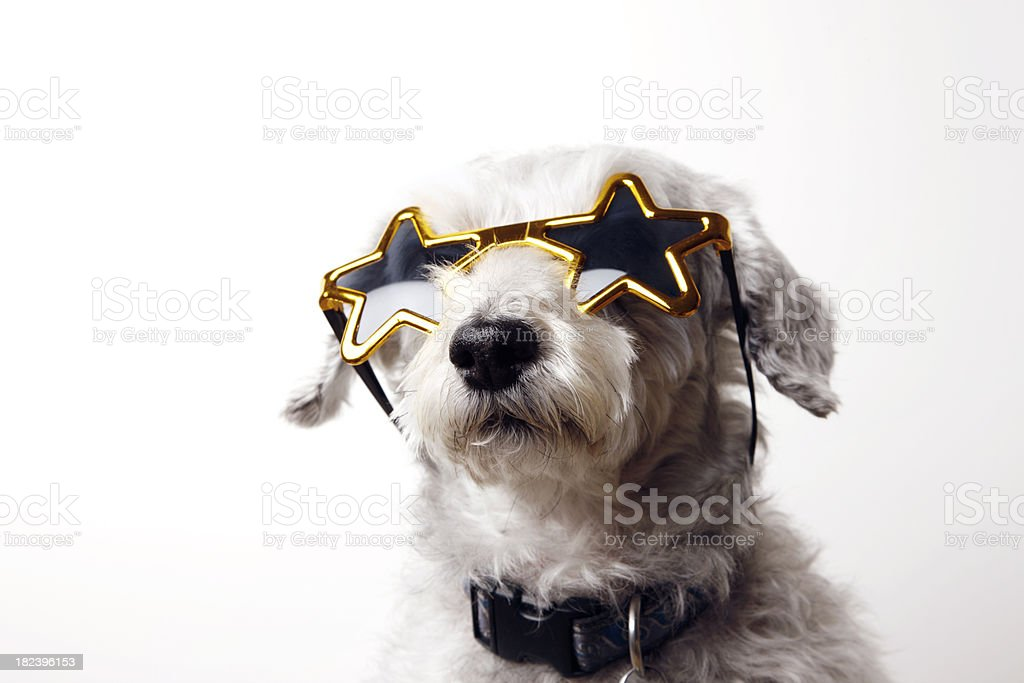 Canine Superstar royalty-free stock photo