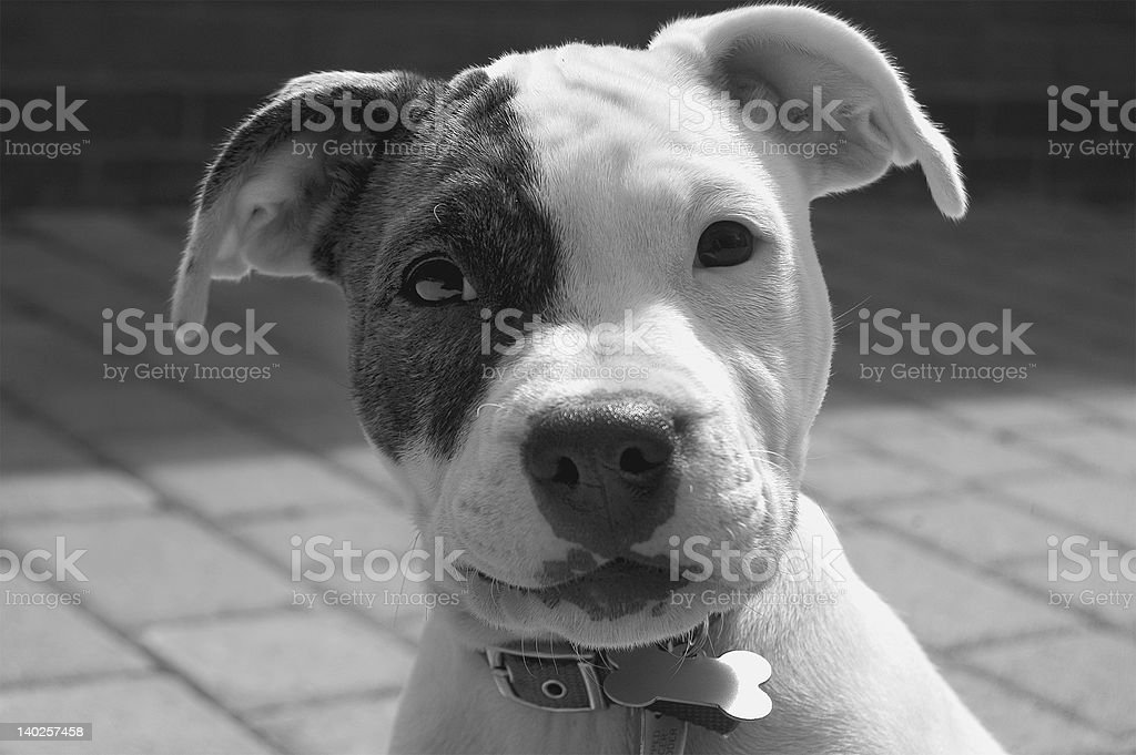 Canine trouble stock photo