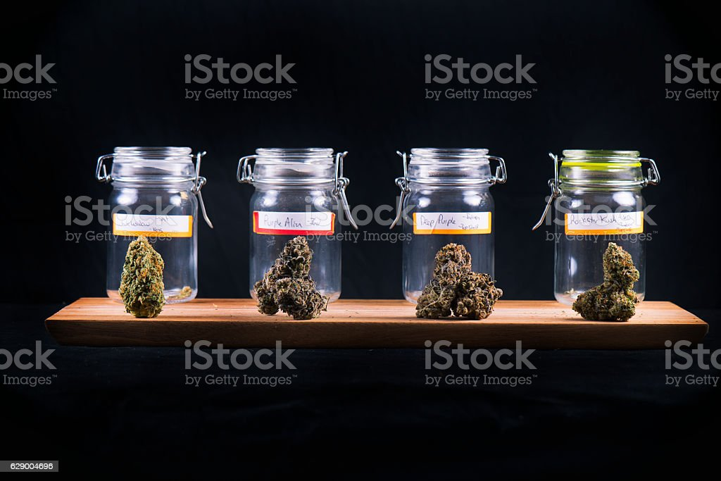 Cannabis buds in glass jars - medical marijuana dispensary concept stock photo