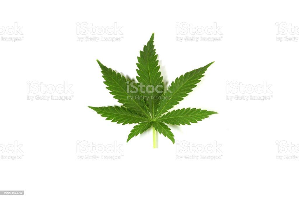 Cannabis leaf ion white background stock photo