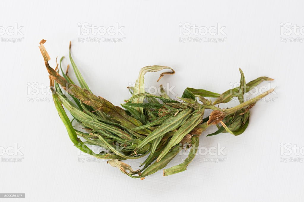 cannabis leaf stock photo
