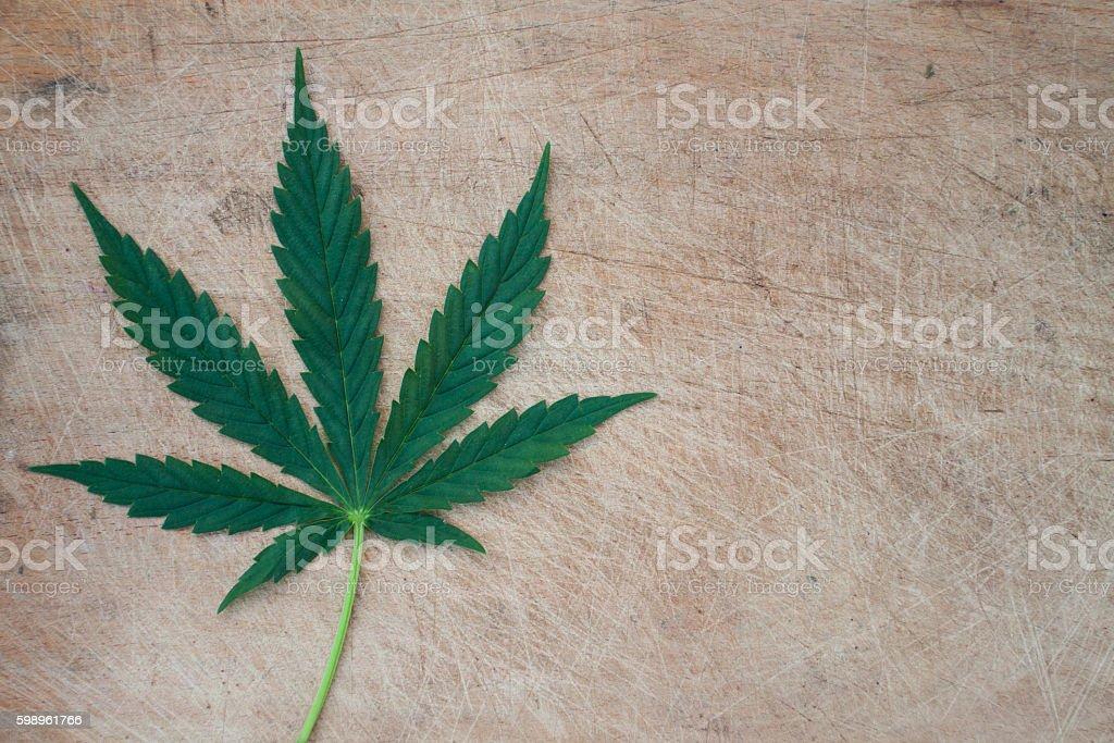 Cannabis leaf stock photo