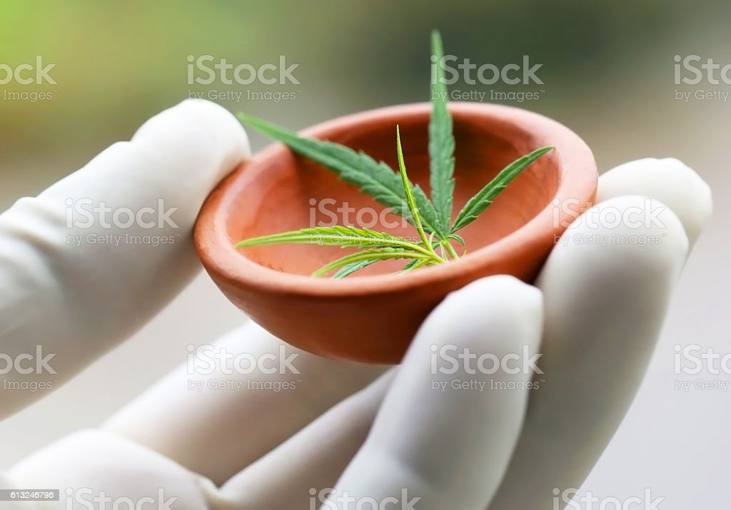 Cannabis or marijuana leaves stock photo