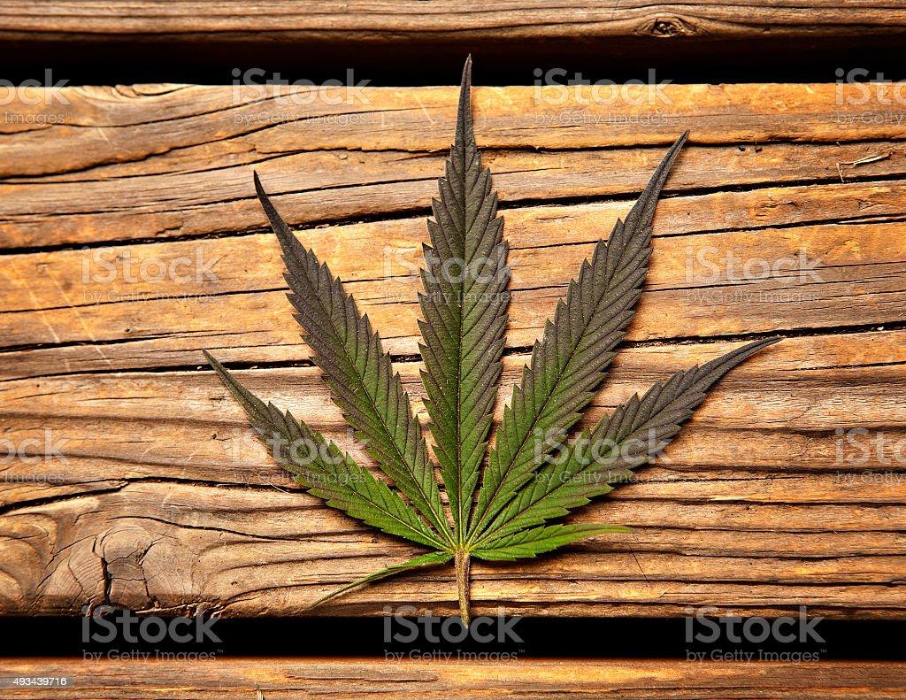 Cannabis Sativa Leaf stock photo