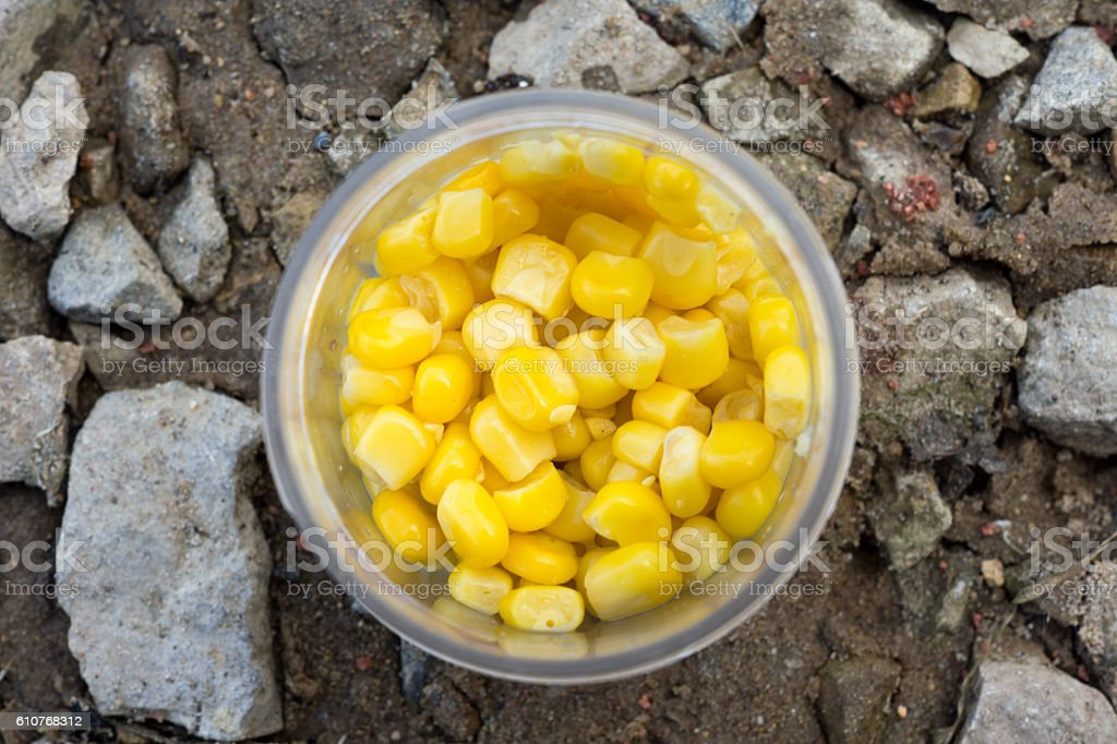 Canned corn in an opened tin can stock photo