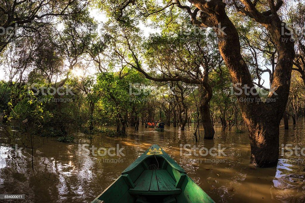 Canoe ride in Tonle Sap Mangrove Forest stock photo