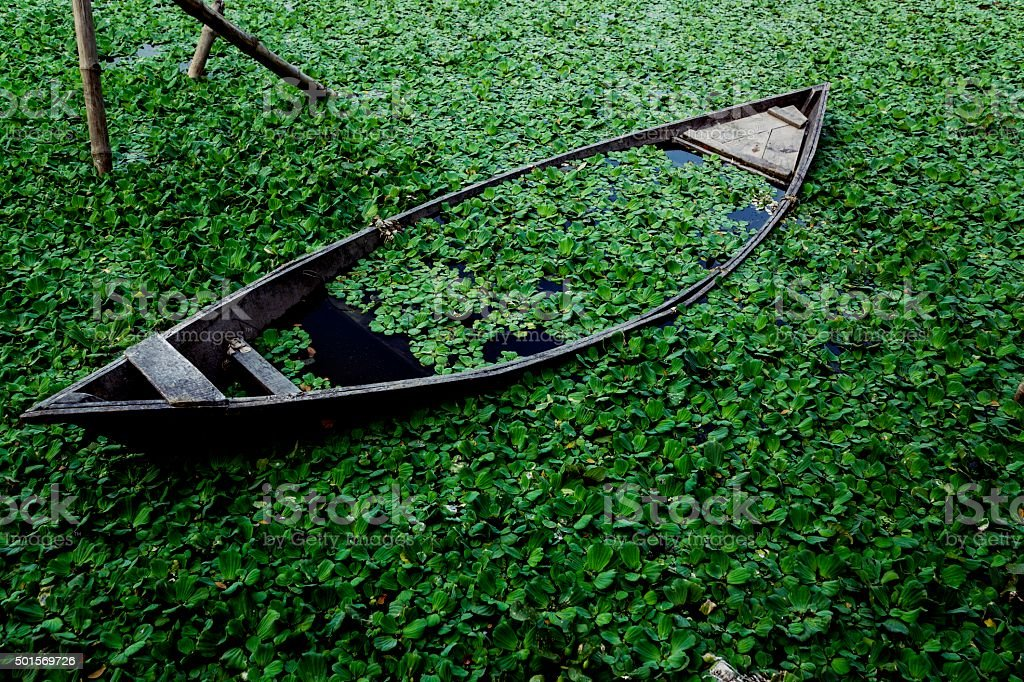 Canoe submerged in leaf filled water. stock photo