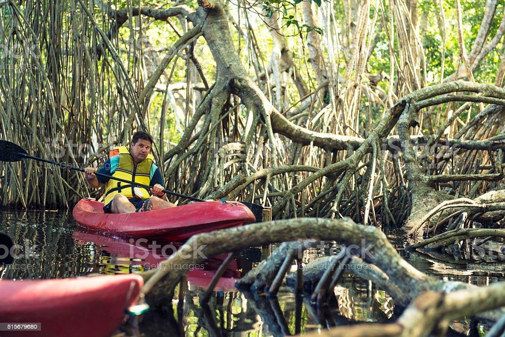 Canoeing in mangrove lagoon stock photo