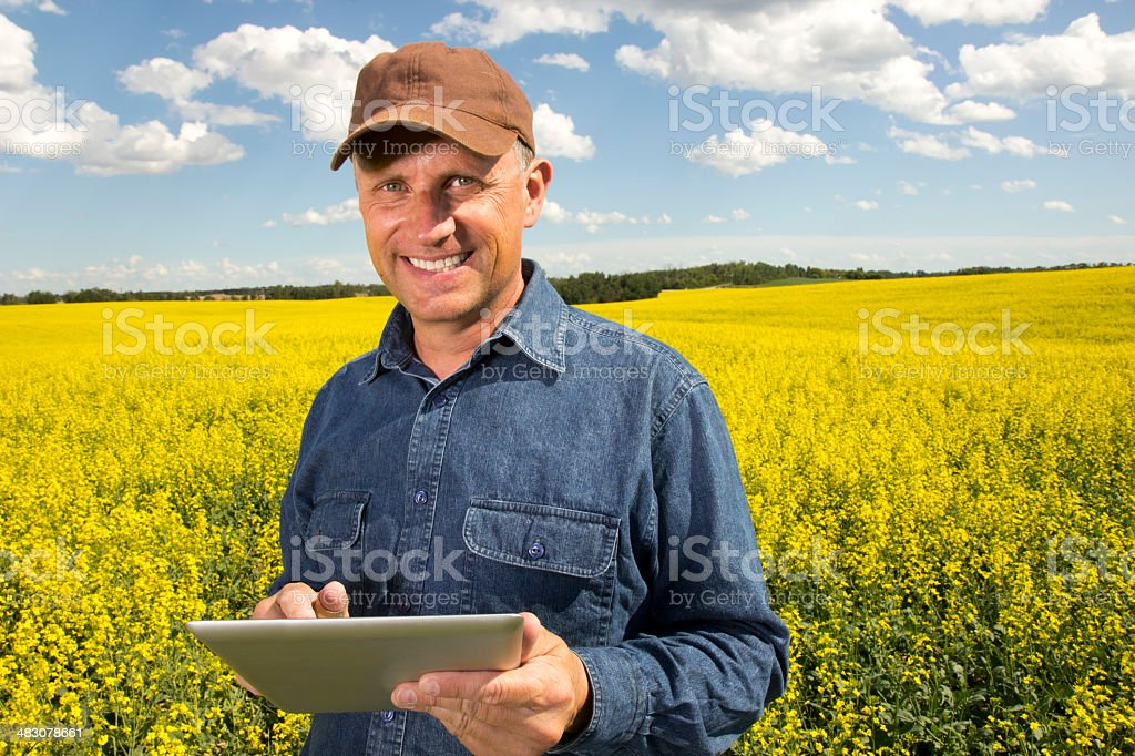 Canola and Computer royalty-free stock photo