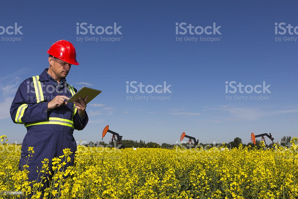 Canola and Oil royalty-free stock photo