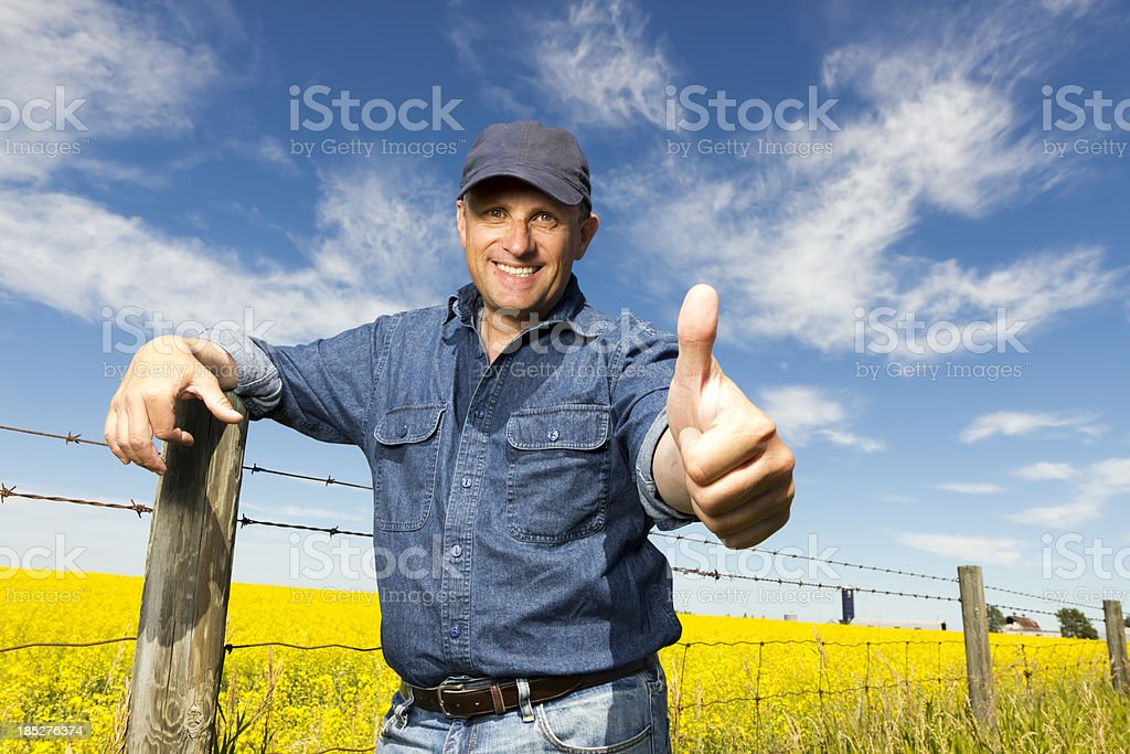 Canola and Thumbs Up royalty-free stock photo