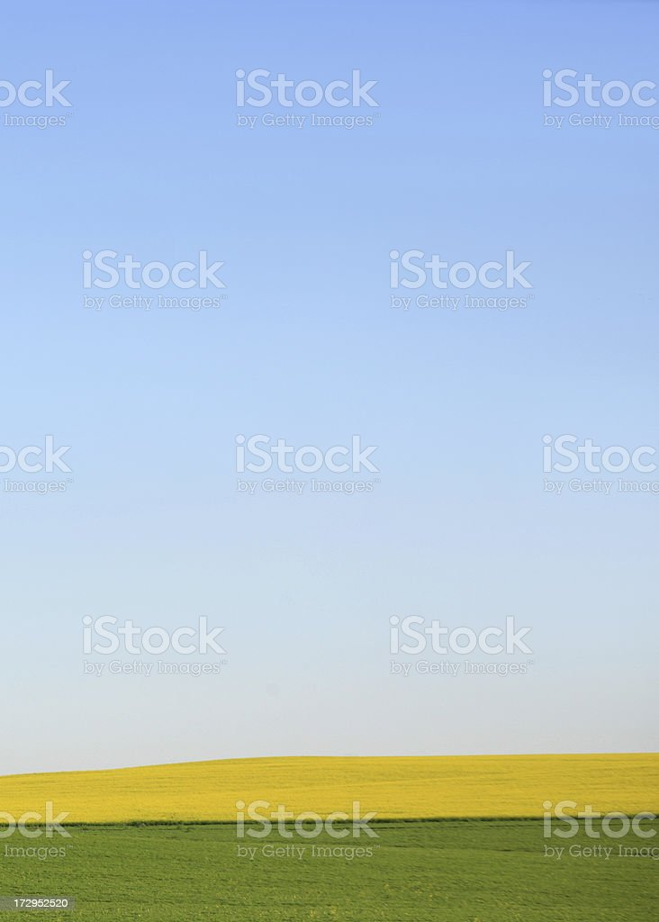 Canola and Wheat royalty-free stock photo