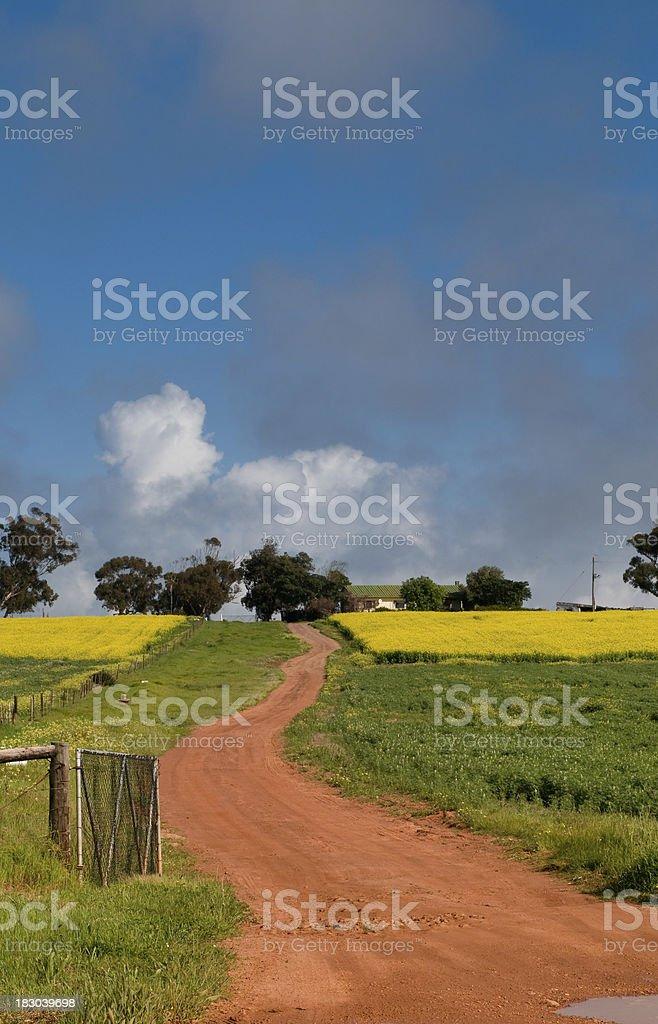 Canola Farm royalty-free stock photo