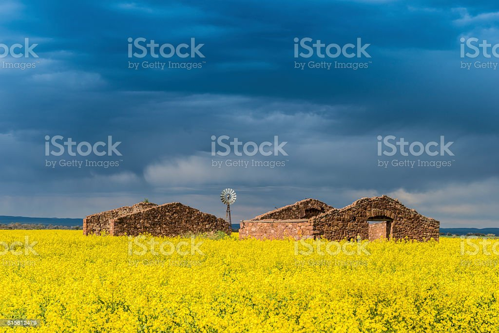 Canola Field with Old Ruined Farmhouse and Thunderstorm Clouds, Australia stock photo