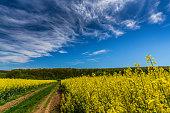 Canola fields in remote rural area