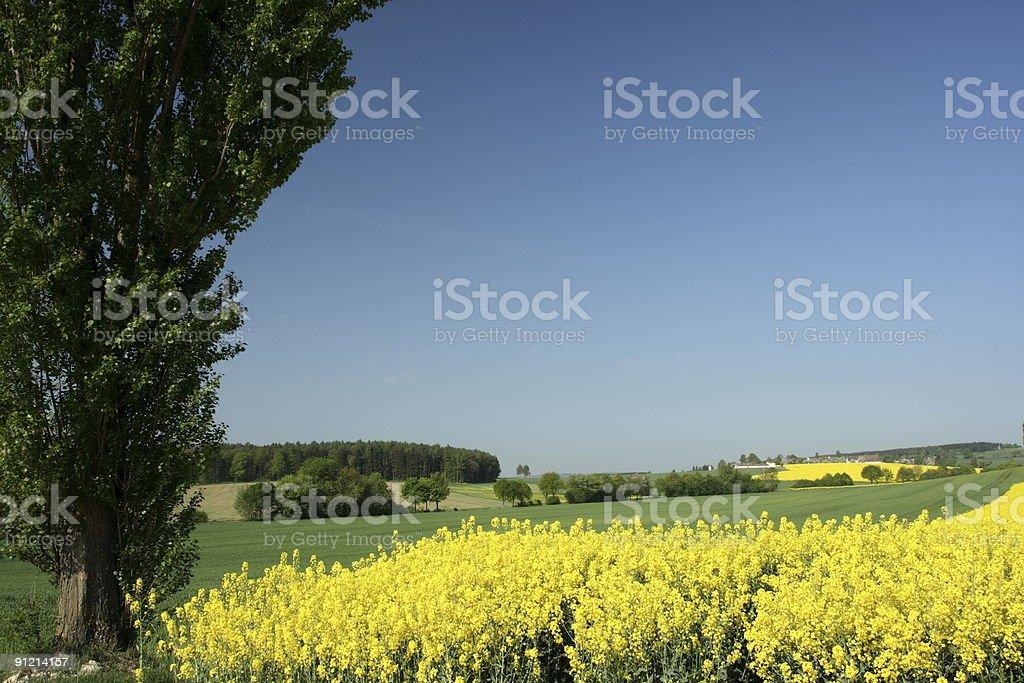 Canola in Germany stock photo