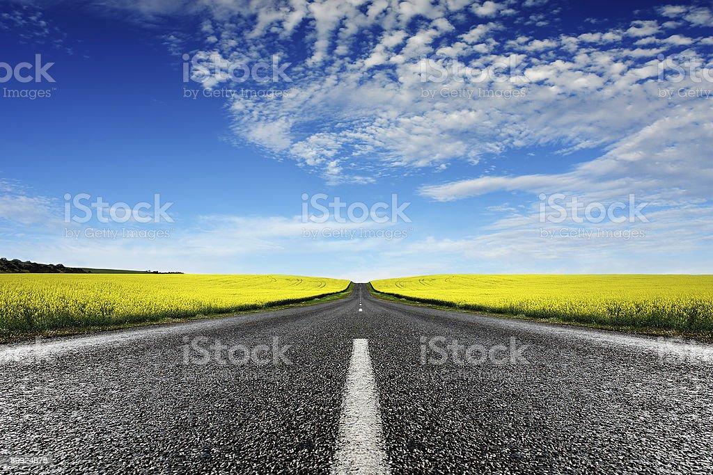 Canola Road stock photo