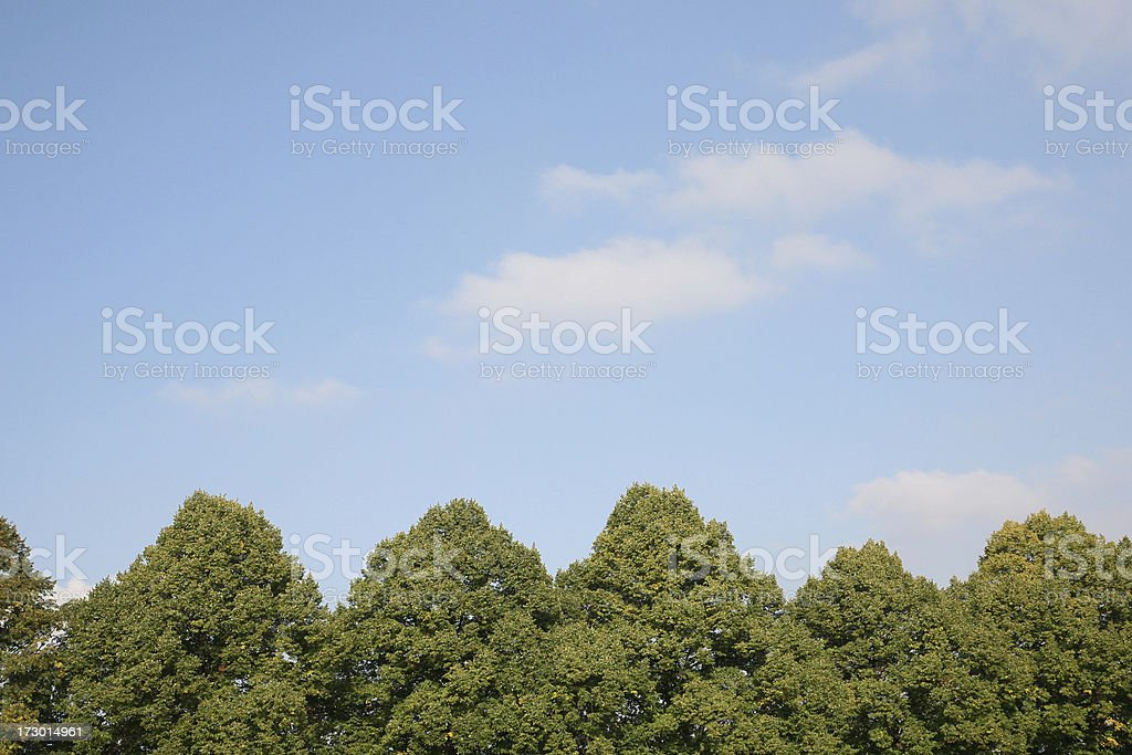 Baumkronen royalty-free stock photo
