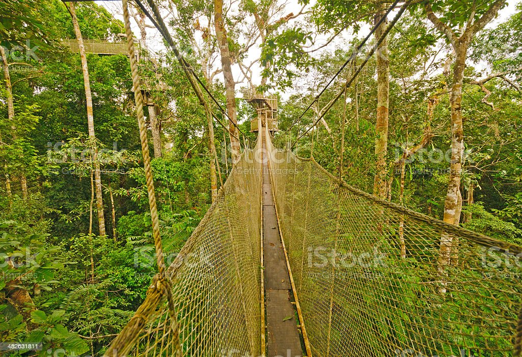 Canopy Walkway in the Rain Forest stock photo