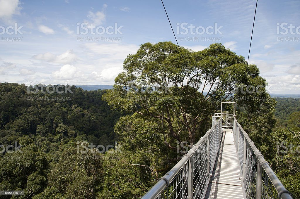 Canopy Walkway in Ulu Temburong National Park, Brunei stock photo