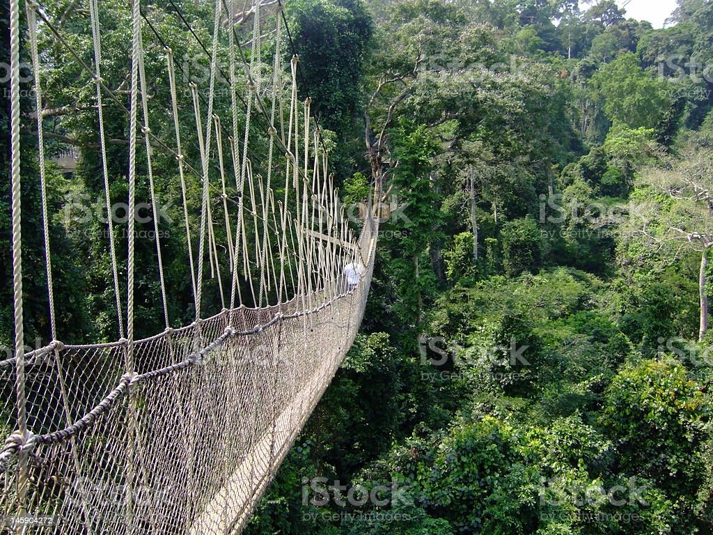Canopy Walkway stock photo
