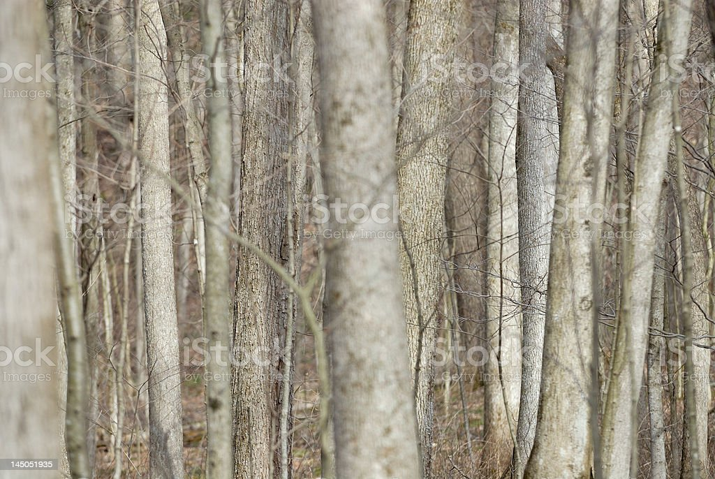 Can't see wood for the trees royalty-free stock photo