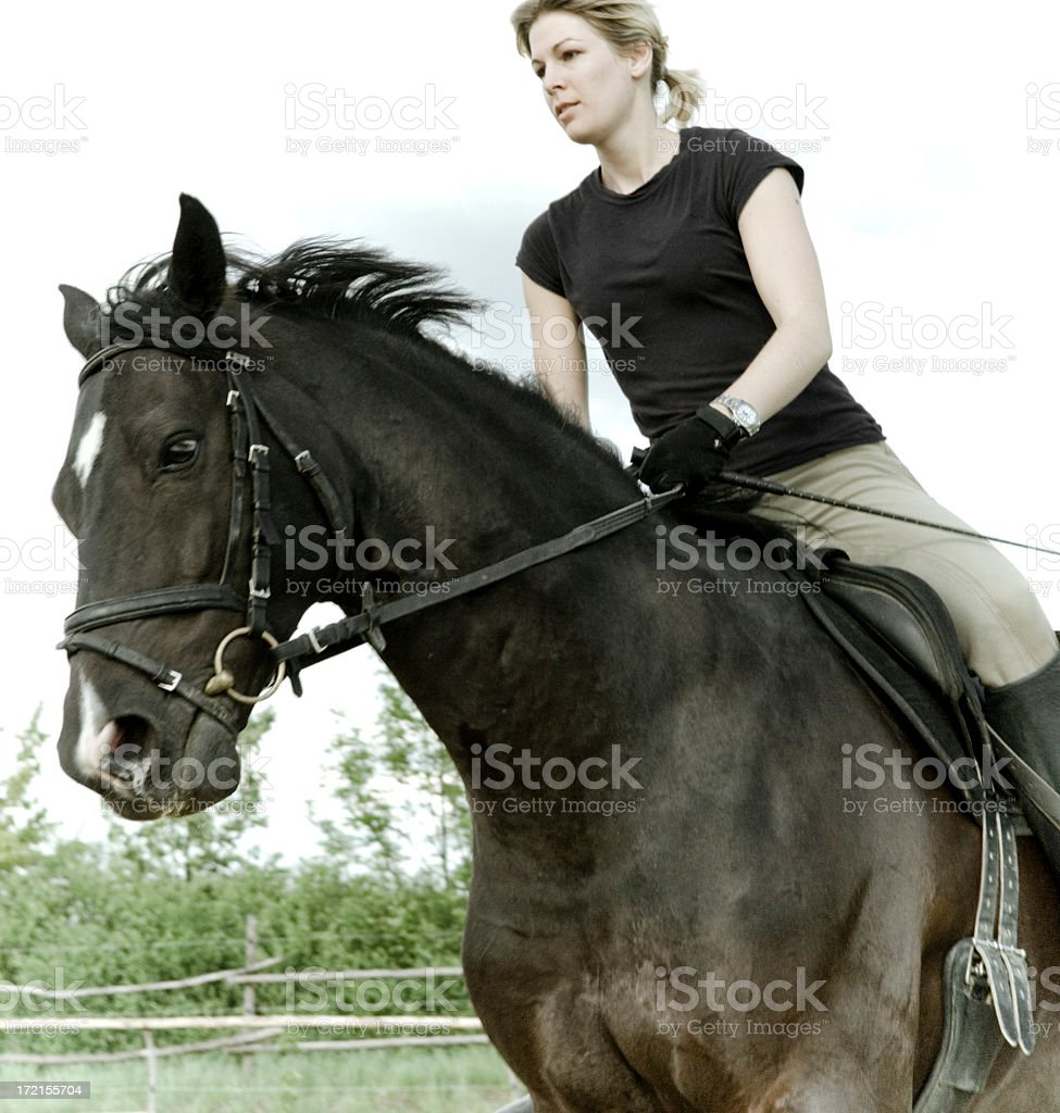 Canter royalty-free stock photo