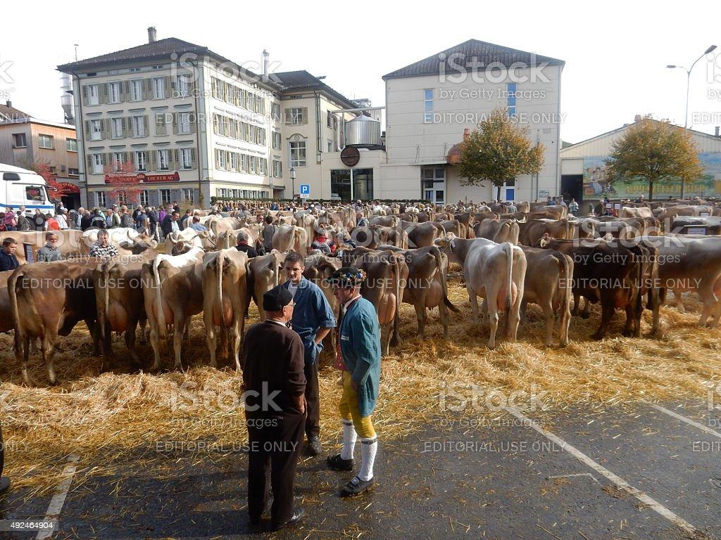 Cantonal Cattle Show stock photo