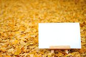 Canvas & easel on autumn yellow leaves