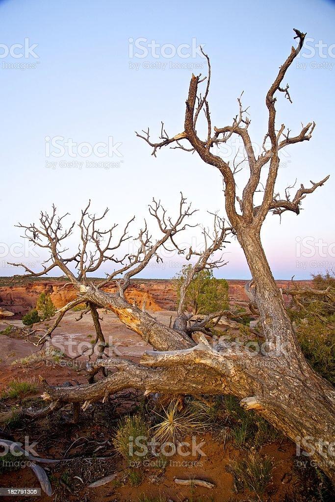 Canyon di Chelly albero foto stock royalty-free