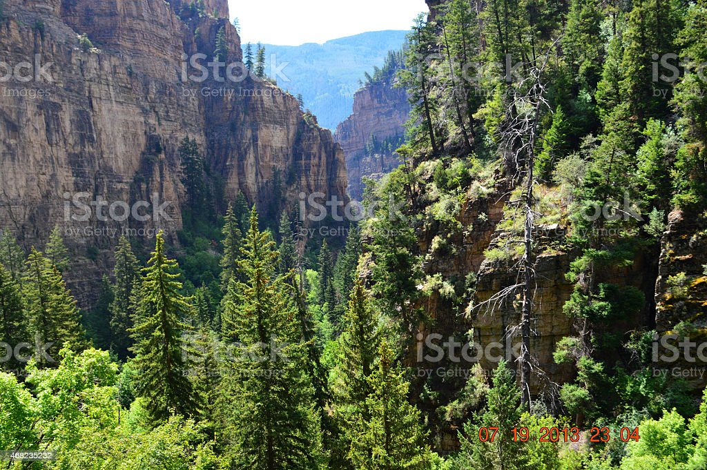 Canyon Forest stock photo