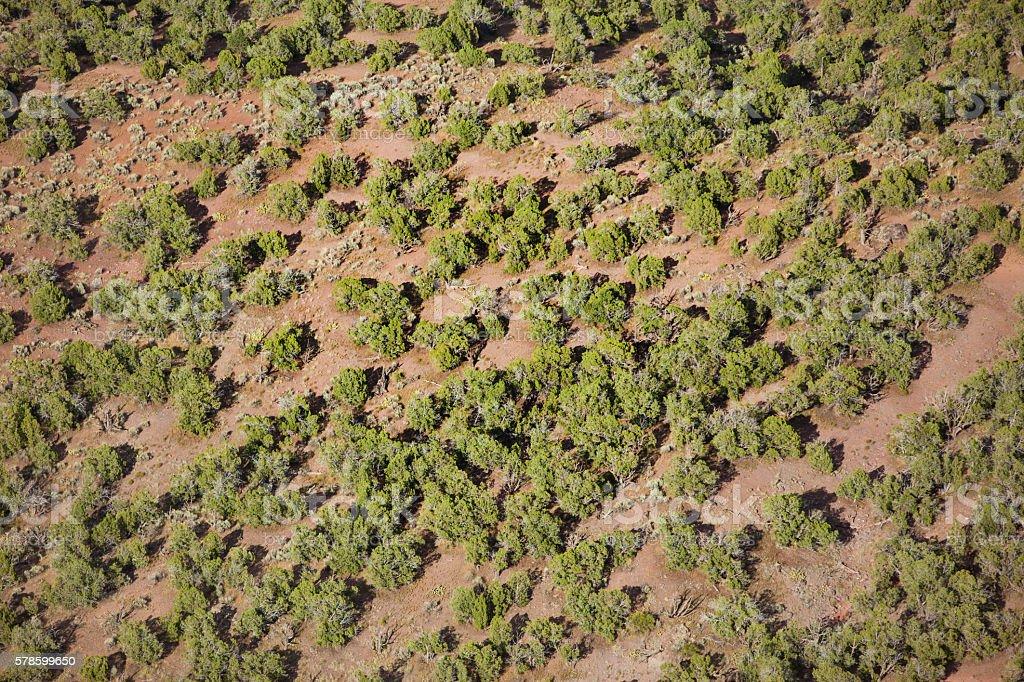 canyon landscape Western Colorado Desert forest stock photo