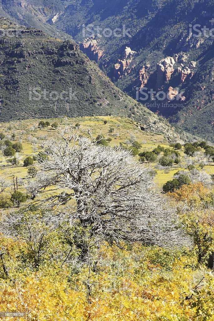 Canyon Valley Wilderness Scenic Landscape royalty-free stock photo